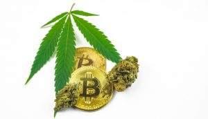 Traficante de maconha processa polícia pela apreensão de 226 bitcoins em 2013