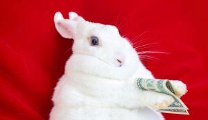 coelho, dólar