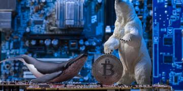 baleia, urso, bitcoin